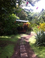 Lush path towards papaya, avocado and jungle delights at the Sanctuary at 2 Rivers