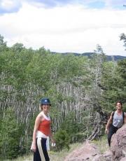 The Aspen Trees